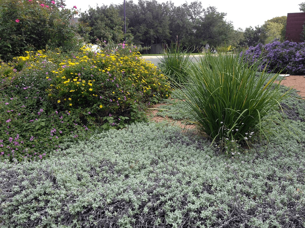 Designing A Beautiful Hill Country Landscape Please Get In Contact With Our Yarrow Landscaping Design Team We Would Love To Start The Planning Process